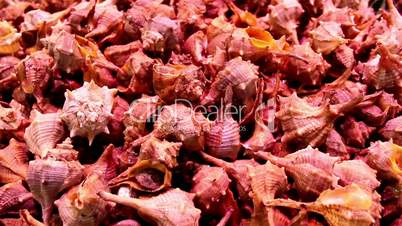 Small sea shells on display piled seashells