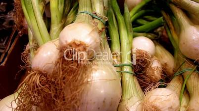 Well cropped eco spring onions