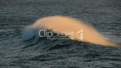 beautiful wave crest at sundown 11124