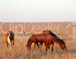 three horses grazing in pasture