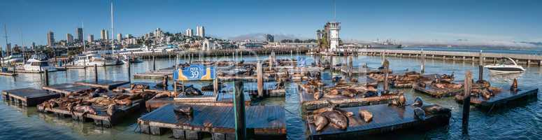 sea lions at pier 39 panorama