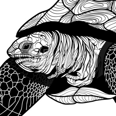 turtle animal head symbol for mascot or emblem design