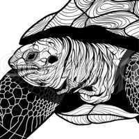 turtle animal head symbol for mascot or emblem design, logo vector illustration for t-shirt.