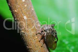 insekt mit fluegel auf ast