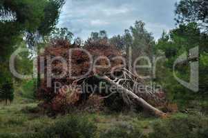 fallen tree in a forest