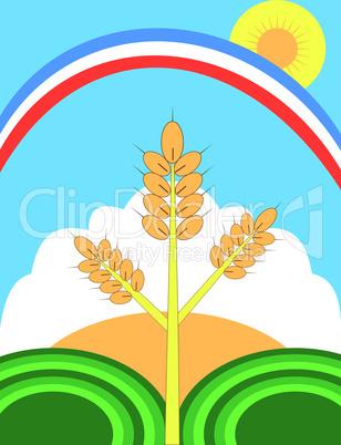 ear of corn, field, rainbow, sun