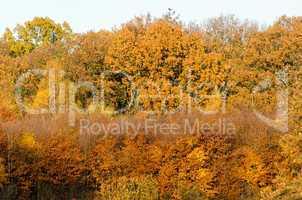 autumn forest seen from far away