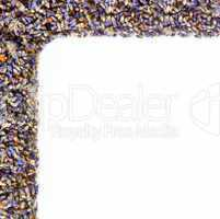 Corner of flowers of lavender