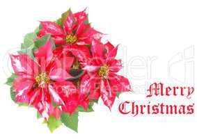 merry christmas greeting diners