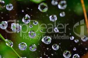 regentropfen auf spinnennetz und wald