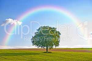 obstbaum mit regenbogen