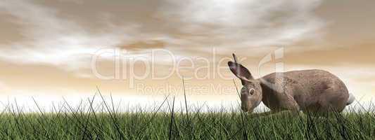 quiet hare - 3d render