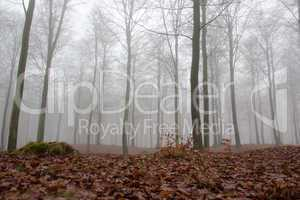 fog in winter forest
