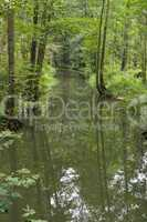 im spreewald, spree forest in germany