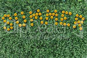 inscription of yellow flowers on a background of grass