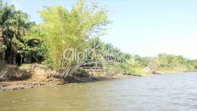 karibikküste mit mangroven