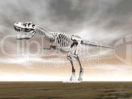 tyrannosaurus rex skeleton - 3d render
