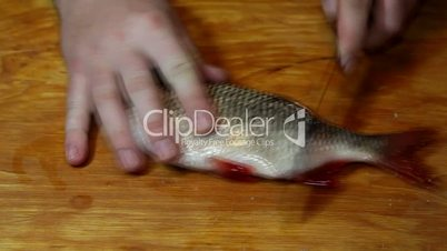 Fisherman hands with knife cleaning fish