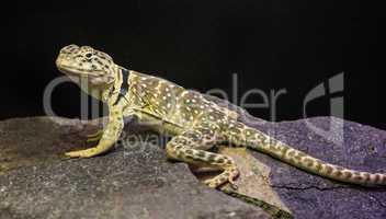 lizard between leaves
