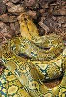 snake creeps on the earth