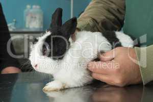 rabbit in a veterinary office