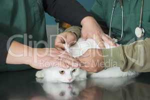 cat in a veterinary