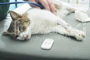 veterinary blood test
