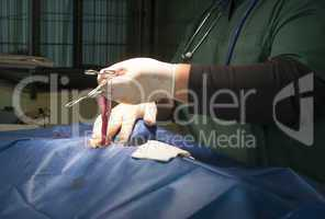 animal in a veterinary surgery