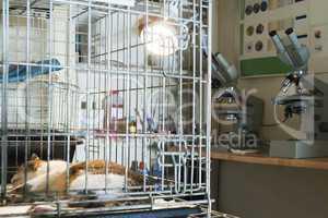 cat at veterinary laboratory