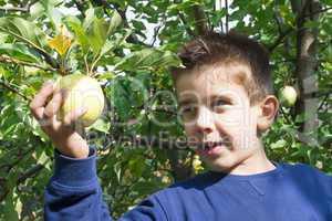 child pick off apple