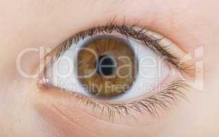 human eye brown color