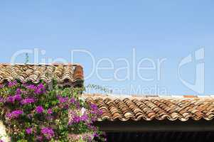 tile roof and purple flowers