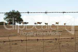 animals on a farm surrounded by barbed wire