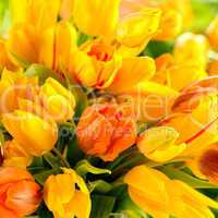 detail of colorful tulip flowers spring