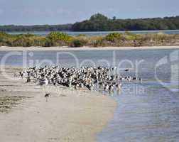 bird colony on the seashore