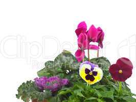 Group of seedlings with copyspace