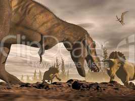 tyrannosaurus roaring at triceratops - 3d render