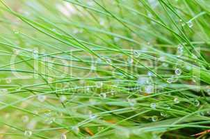 dew drops on grass