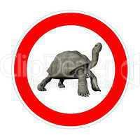 turtle speed limit