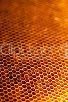 Honigwabe mit Honig und Bienenwachs
