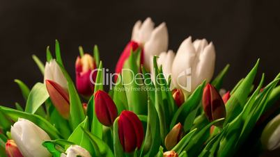 bouquet of bright tulips blooms, timelapse