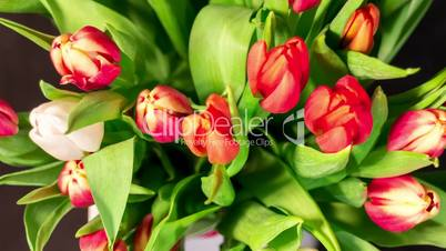bouquet of bright tulips blooms, top view, timelapse