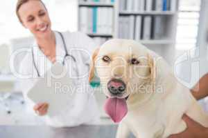 Dog with female veterinarian