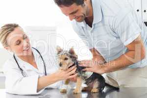 Vet examining puppy with man