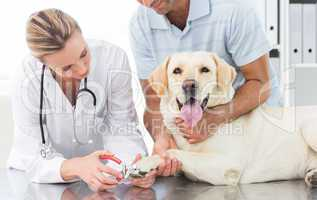 Dog getting claws trimmed by female vet