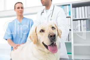 Dog with veterinarians