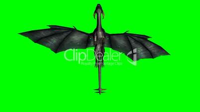 dragon in flight - green screen
