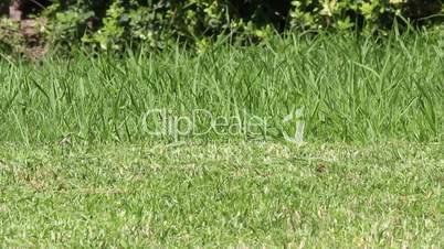 Mower cuting lawn