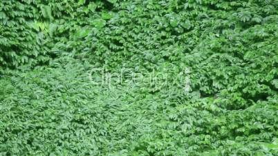 tropical vegetation moving