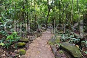 trail in tropical rainforest